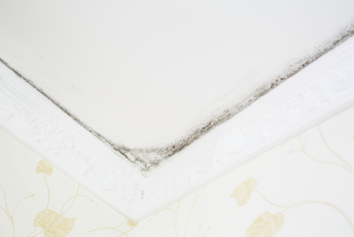Cleaning Wall And Ceiling